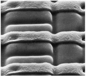 P-type diffusant on N-type silicon dioxide. (Lattice Semiconductor)